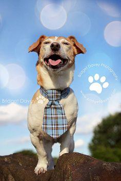 Taz | Dog Photography Milton Keynes