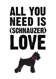 All u need is schnauzer LOVE