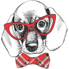 Image of a dog beagle in glasses with bow. Vector black and white illustration… Animals And Pets, Cute Animals, Dachshund Love, Daschund, Painting For Kids, Dog Art, Pet Shop, Animal Drawings, Beagle