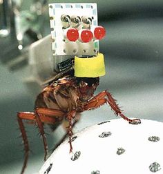 Robot Zombie Cockroach. A research team at Tokyo University is making these bio-bots by lopping off the antennae of regular roaches and replacing them with pulse-emitting electrodes. The researchers then send signals with a remote control to a backpack worn by the roach that powers the electrodes. The roaches can be told to go left, right, forward and back