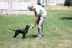 Teaching a puppy to shed hunt!