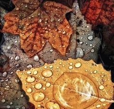 Wet Autumn Leaves Pictures, Photos, and Images for Facebook, Tumblr, Pinterest, and Twitter