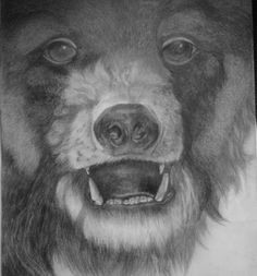 grizzley bear portrait in graphite, 16x12 by 1bluwall on Etsy