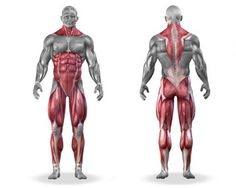 what muscle groups do deadlifts work