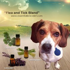 Add this blend to your Essential oil Pet Diffuser from Essential Bracelet to keep Fleas and Ticks away from your pet.