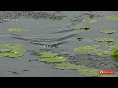 Mancing Cuma Pakai Karet Bisa Dapat Ikan #mancingliar - YouTube Fishing Videos
