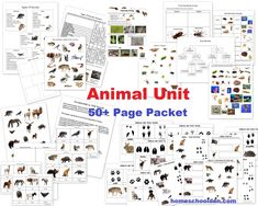 Animal Unit - feathers fur scales skin vertebrates invertebrates insects spiders - worksheets