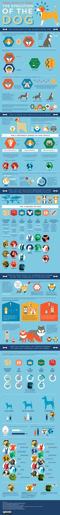 The Evolution of the Dog #dogs #evolution