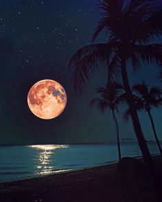 ImageFind images and videos about summer, nature and beach on We Heart It - the app to get lost in what you love. Moon Moon, Blue Moon, Orange Moon, Moon Photos, Moon Pictures, Beautiful Moon, Beautiful Images, Shoot The Moon, Moon Photography