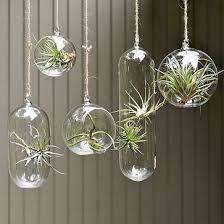 hanging terrarium - Buscar con Google. I'm in love with hanging terrariums!