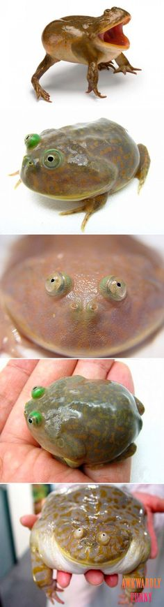 Lawl.. you will love this! lol frog