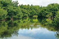 Caño bordeado por manglar en la bahía de Cispatá.