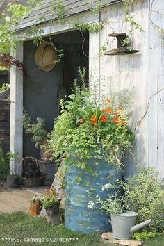Potting Shed Ideas Love Garden, Dream Garden, Garden Art, Garden Design, Container Plants, Container Gardening, Garden Structures, Plantation, Garden Gates