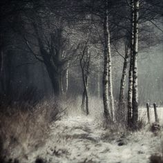 Wabi Sabi Art + Design from a Scandinavian perspective Natural elegance Scandinavian modern Harmonious style Creative spaces Clever DIY Tutorial Stunning Photography, Landscape Photography, Nature Photography, Scandinavia Design, Winter's Tale, Winter Scenes, Mists, Photo Art, Beautiful Pictures