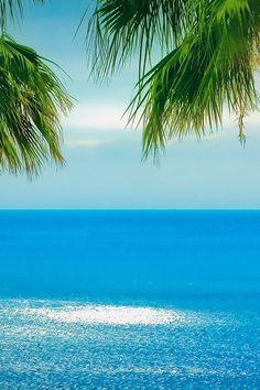 FREEIOS7   palms-tree-beach   freeios7.com