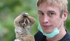 "Slow Loris and Rescuer befriend each other The Slow Loris is listed as ""Endangered or Vulnerable"" on the IUCN Red List. We bet this rescuer gets attached to this adorable baby with large eyes!"