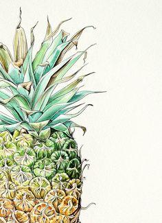 Pip Boydell illustrations