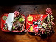 サーディン缶の多肉寄せ植えその後 http://mmetomato.blogspot.fr/