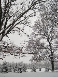 Snow... The kind that sticks to the tree branches and makes the world all white and beautiful. Maybe just one for Christmas this year? Sigh....