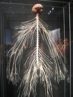 Human - Nervous System ...trees