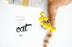 blog somewhere Wish, Stud Earrings, Blog, Cat, Stud Earring, Cat Breeds, Blogging, Cats, Earring Studs