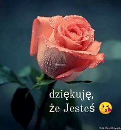 Dziękuję że jesteś Beautiful Love Pictures, Motto, Positive Affirmations, Lady In Red, Ecards, Thankful, Gifts, Interiordesign, Puzzle