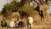 Zambia tours and safaris, book a safari to Zambia, a safari destination that offers some of the best Southern African safaris. Tanzania Safari, Adventure Holiday, Victoria Falls, Seven Wonders, Self Driving, African Safari, Wonders Of The World, Luxury Lodges, National Parks