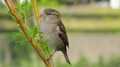 a small bird by Vidislava T. Capricorn Facts, Small Birds, My Photos, Random, Animals, Animales, Animaux, Little Birds, Animal