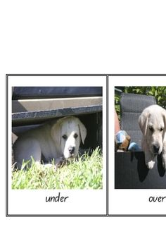 Preposition Puppy Labrador A5 Posters - PDF file 8 page resource file.Positional language/Prepositions.My personal photo collection of ...
