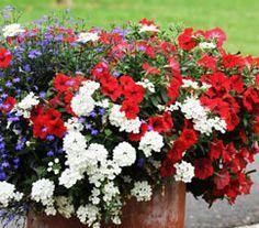 Jardin Express : Et si vous mettiez un drapeau dans votre pot ? Il sera déployé pour le 14 Juillet (et même avant, jusqu'aux gelées). Une idée patriote pour fleurir vos jardinières, vasques ou grands pots