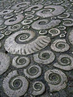 The Golden Ratio - Ammonite pavement in Lyme Regis, Dorset, Great Britain - a World Heritage site