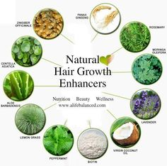 Natural Hair Growth Enhancers - Aloe vera, rosemary, lemon grass, cocnut, lavender, peppermint & ginseng