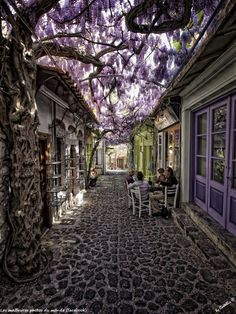 Santorini, Grecia Wisteria! Oh this place must smell absolutely lovely!