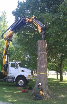 Treeremoval Sydney Services Are Needed In Times When A