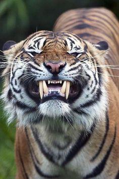 Edgar Eraspuss @EdgarEraspuss   Just had my teeth cleaned!