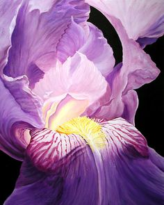 Google Image Result for http://www.riverstonegallery.com/floral_paintings/images/purple-fire.jpg