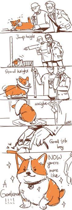 Harry gets a corgi! (Eggsy Corgi?) - Sooo cuteeeee!!!! I want a corgi like that! :D 2/3