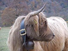 Morag models a hand-forged Scottish cow bell with hardy leather accessory, suited for those harsh highland winters.