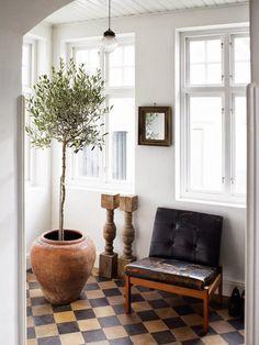 Oliveira (Olea europaea)  Oliveiras, com sua folhagem acinzentada e porte pequeno natural, dão um toque rústico a qualquer decoração. De baixa manutenção, são um ótimo destaque para ambientes fechados.