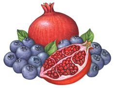 Tropical fruit illustration of a whole pomegranate, a cut half pomegranate and blueberries. Fruit Illustration, Pineapple Coconut, Acai Berry, Exotic Fruit, Stock Art, Food Illustrations, Pomegranate, Food Art, Blueberry