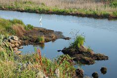 Wetlands - Chincoteague Virginia