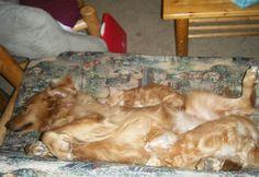 Folati bassi nel cane e nel gatto: cause e cosa fare