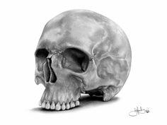 skull photography Αναζήτηση google skulls pinterest google