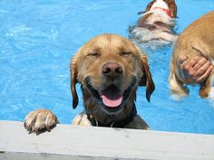 This Is What A 'Pool Pawty' At A Dog Daycare Center Looks Like