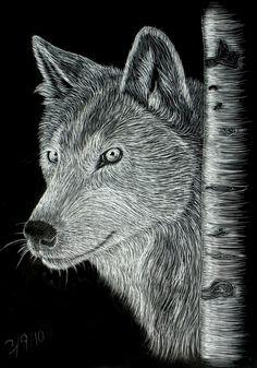 Image result for fox scratchboard