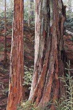 Redwoods - Merle Axelrad