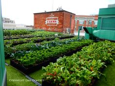 Fenway Gardens scores a home run for Boston Red Sox with this new rooftop urban farm.