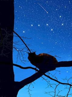 """Kathleen Horner's description: """"Our Manx cat, Eclipse, sits huddled on a limb in awe of The Big Dipper. Manx Kittens, Manx Cat, Digital Art Photography, Cat Photography, Ursa Major, Big Dipper, Cats For Sale, White Cats, Black Cats"""