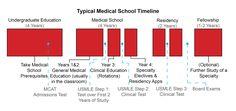 medical school timeline   Med School Timeline