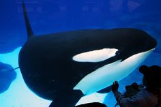 SeaWorld CEO Says They Make The World 'A Better Place For Animals'